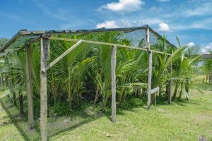 STATUS OF THE REGIONAL COCONUT INDUSTRY AND THE WAY FORWARD TOWARDS ITS DEVELOPMENT, OCT 2016, HOSTED BY CARDI/ITC