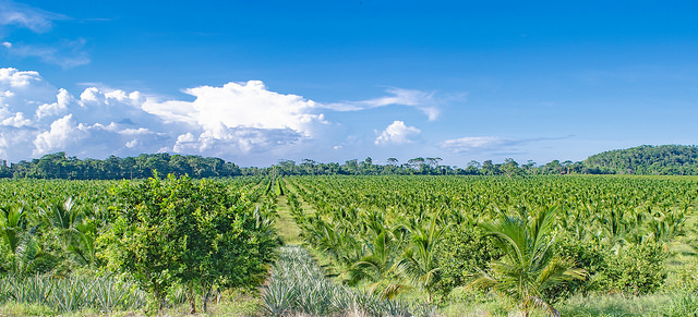 Challenges in the Coconut Industry and Strategies to Overcome Them