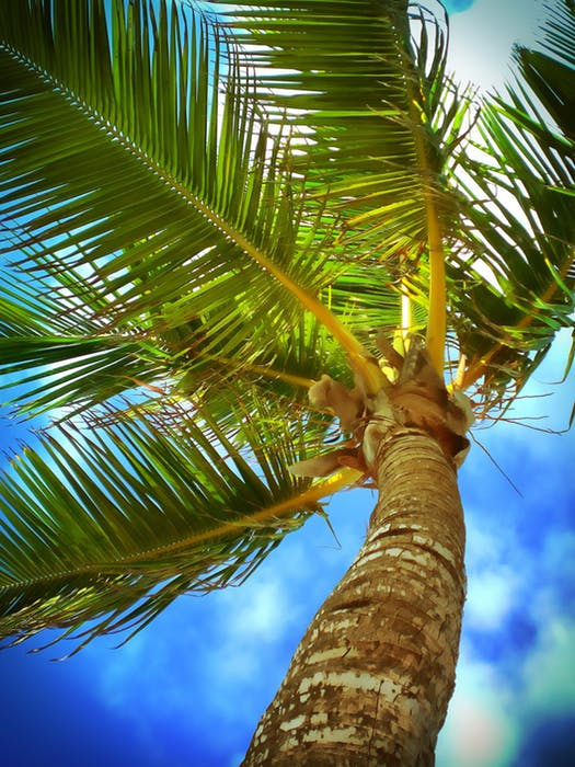 Introduction to Coconut